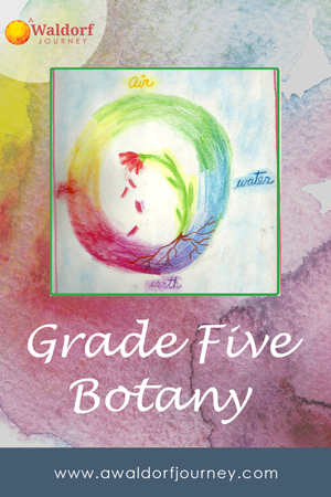 waldorf grade five botany