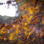 colorful autumn swirley bokeh plant